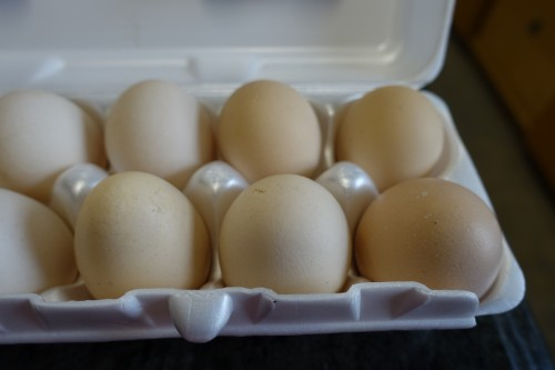 Peter's Organic Eggs - the best eggs I have ever tried